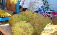 Индийский ДжекФрут - самый клейкий фрукт
