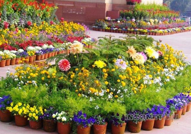 Дели, цветы Индии