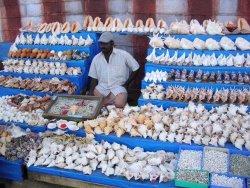 Раковины индийского океана