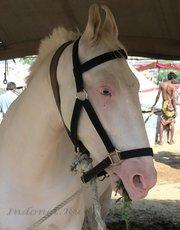 Конь-альбинос