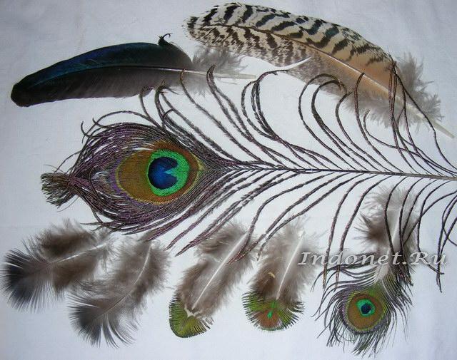 павлинья перья