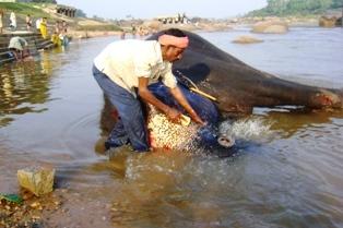 Священная слониха Лакшми в Хампи