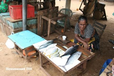 Негомбо. На рыбном рынке