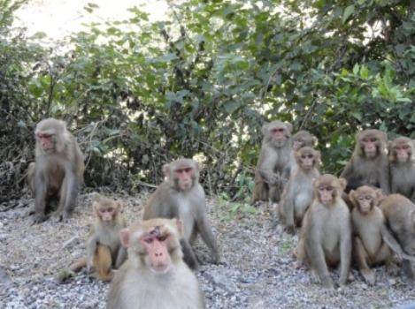 семья обезьян