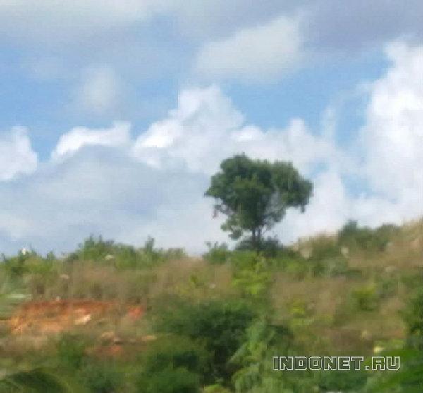 индия, путтапарти, дерево в облаках