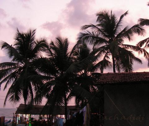 Кокосовые пальмы на закате в Арамболе.