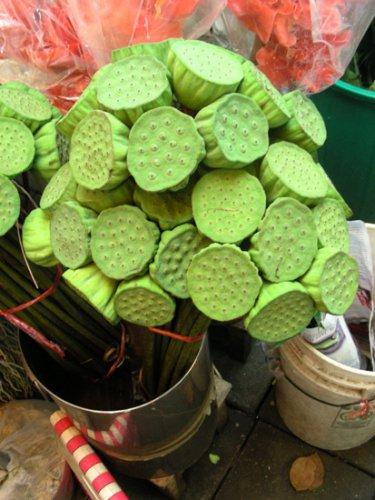 неизвестные тайские декоративные растения