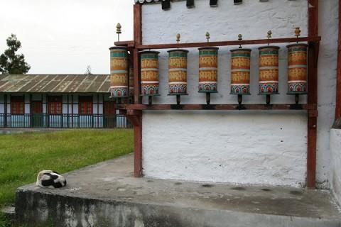 Ташидинг. Собака и молитвенные мельницы