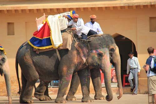 Джайпур. Слоны в Амбер форте
