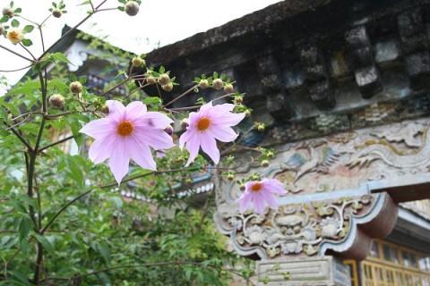 Цветы Пемаянгцзе
