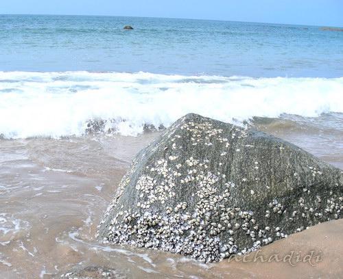 Прибрежные валуны, обросшие ракушками
