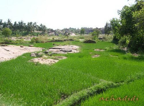 Хампи, 5 минут от города и уже рисовые поля