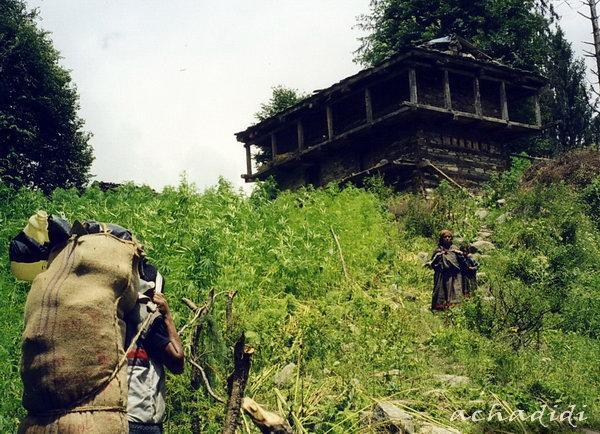 Трекинг в Гималаи