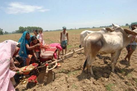 Жители Бихара проводят обряды чтобы вызвать дождь