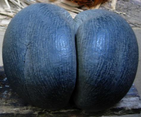 Love nut :)