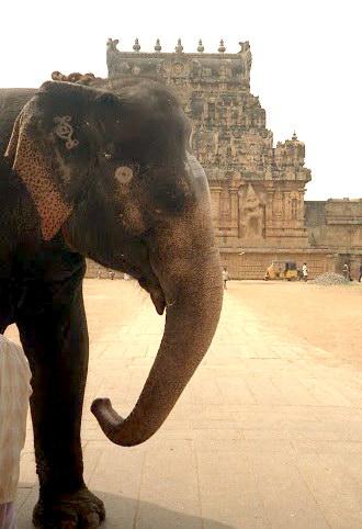 Слон из Танджавура, Тамилнад, фото С.Соловьева