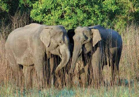Слоны в Корбетте