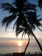 Thumb_goa_palolem_sanset_palm-13.jpg