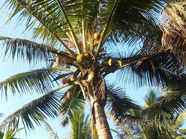 Индия, пальмы