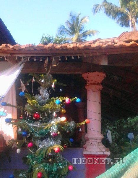 новогодняя елка в индии, под пальмой