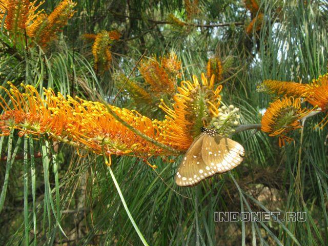 Бабочки, национальный парк около Пури