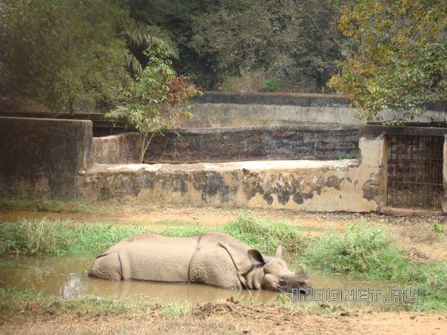 Индия-3. Бхубанешвар, зоопарк Нандаканан