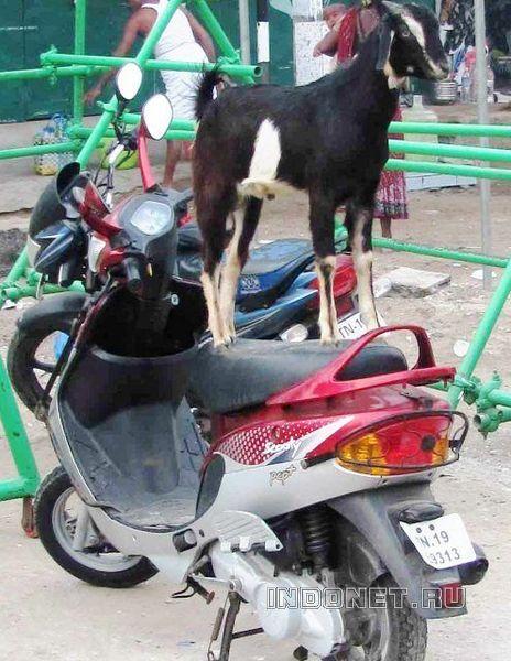На байке в Индии :)
