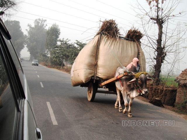 Дороги Индии: жесты, правила, традиции