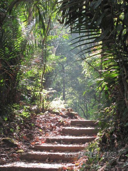 Нонгриат, лес