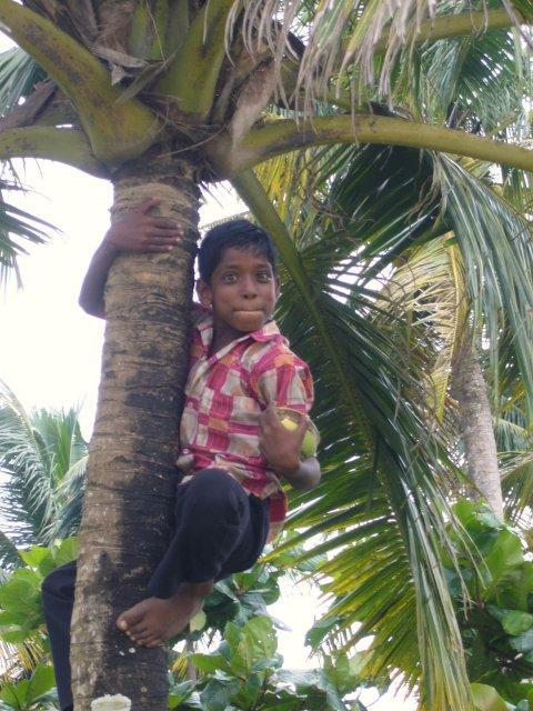 Мальчик с кокосом