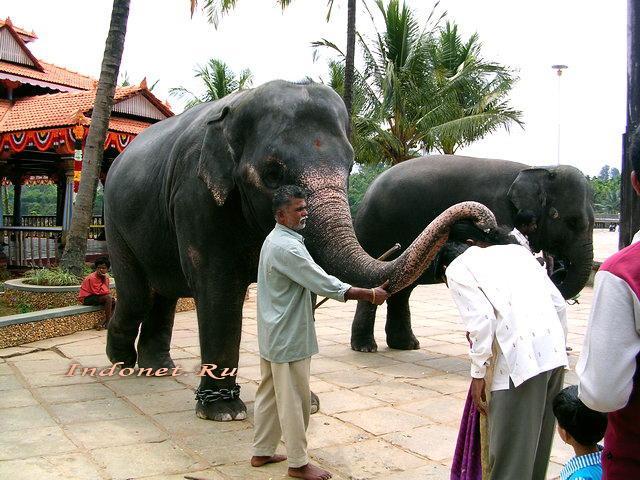 Благословение. Слон из Шрингери