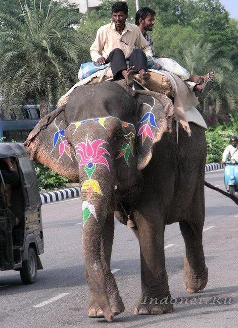 Слон из Амбера