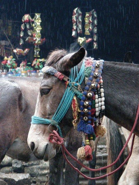 Гархвальские лошади