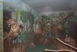 Тигры дворца Джай Вилас в Гвалиоре