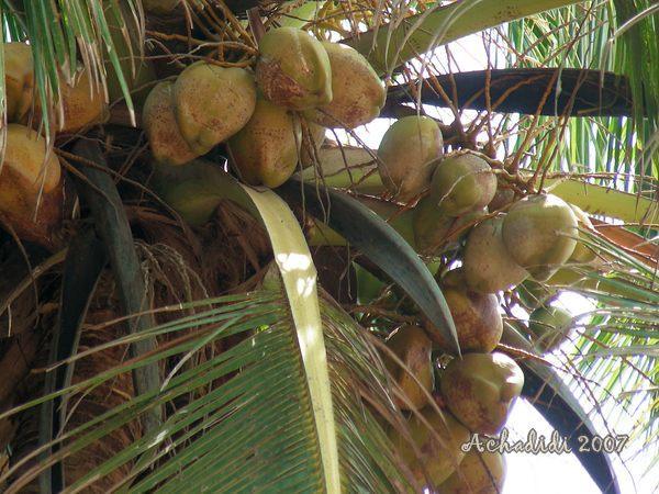 Гоа, под пальмой