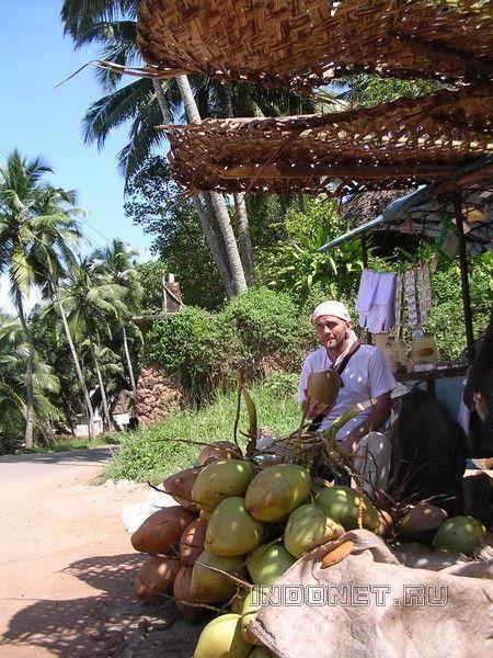 Кокосы в Керале. И мой попутчик Андрей :)