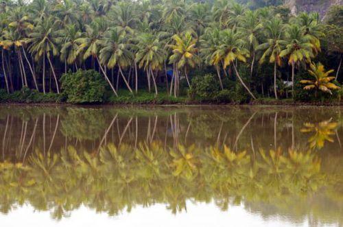 Кокосовые пальмы у озера Аккулам, фото C. Ratheesh Kumar