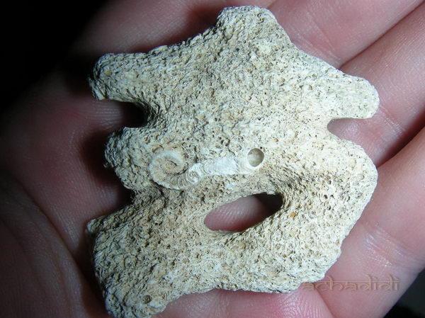 Символ ОМ, коралл без обработки