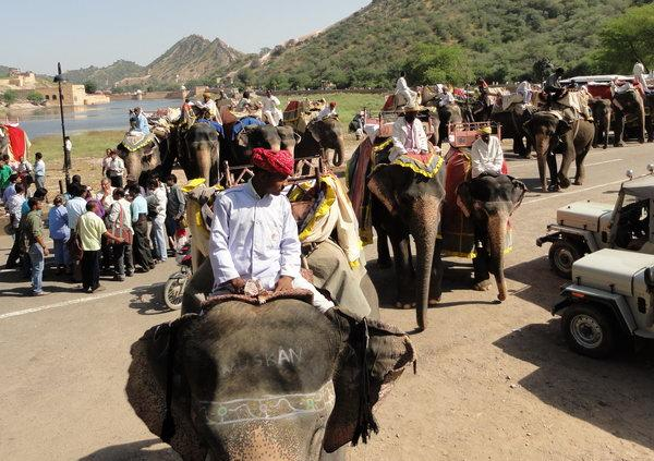 Слоны и туристы. Амбер