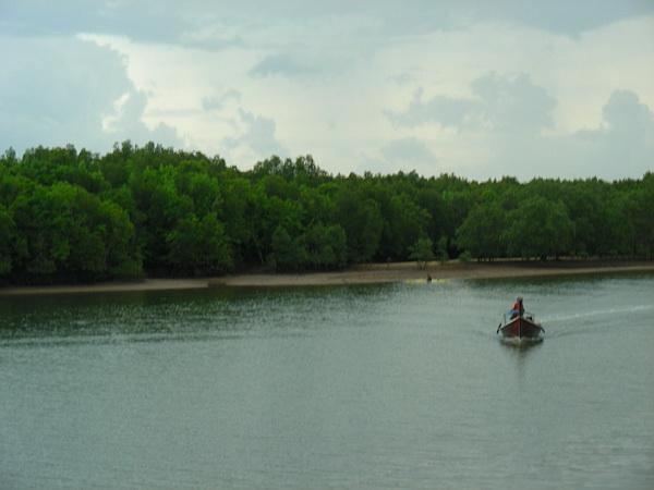 mangroov forest