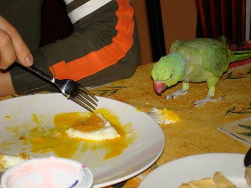 Яичница - любимое блюдо. Особенно желток!