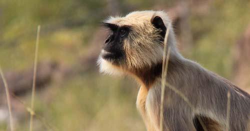 В заповеднике реки Кен, обезьяна