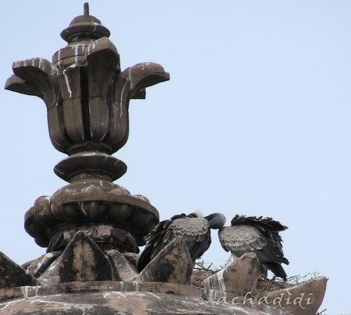Большие хищные птицы во дворце Орчхи