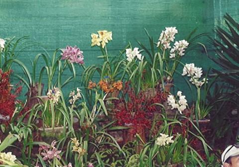 Сад орхидей.jpg