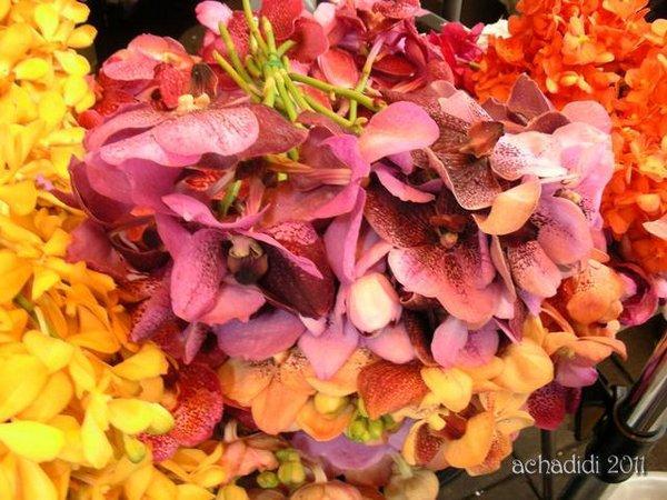 Фото орхидей из Бангкока