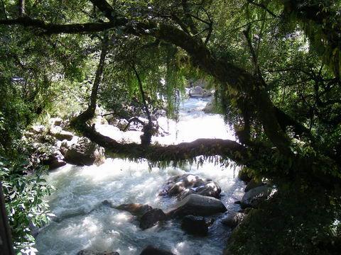 Зачарованный лес в Руч Махадев