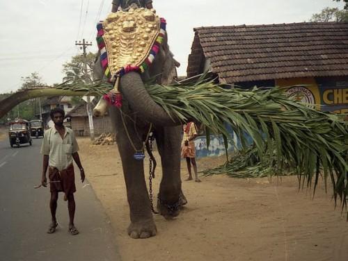 Украшенный к празднику слон, Керала, южная Индия, фото С.Соловьева