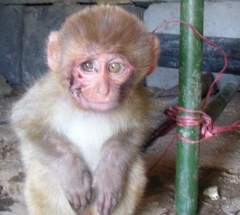 контуженная обезьянка